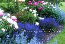 Jardin / Jardinage