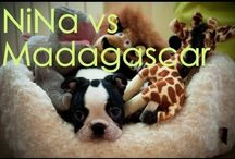 NiNa VS Madagascar
