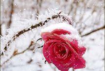 Zima ,Świeta ,Nowy Rok / Zima ,Świeta ,Nowy Rok