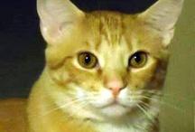 Pets visiting LVC / by Longwood Vet Clinic