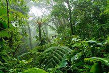 jungle refs