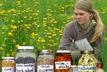 Medicinal Herb Recipes and Articles