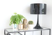 Ogreen @ Home / Plants work like natural air-purifiers, removing harmful toxins from the air & looking stellar while doing so. Time to start your urban jungle!