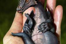louhikäärmeet, dragons / Kuvia lohikäärmeistä.
