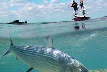 Florida Keys / Flyfishing in the Florida Keys