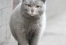*Katten*