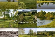 Country Homes and Land for Sale / Live the Country lifestyle - it is all about the lifestyle here in Kentucky.  Plus Kentucky has lots of natural water -  89,400 miles of rivers and streams - 170 public lakes and reservoirs - 114 miles of waterways designated as wild rivers - 4,268 miles of shoreline around Kentucky's three largest lakes - 225,000 acres of wetlands