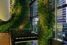 Living Walls / by Amanda Pacetta