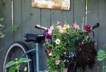 In the garden.... / One day I will have a pretty garden & a gardener!