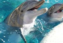 Delphine sind Süß!!