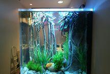 Aquarium!:D