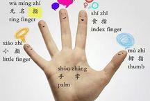 汉语身体结构