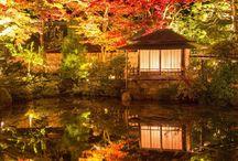 japonia fascinanta