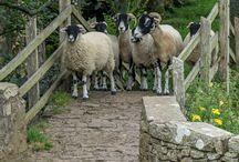 Fauna, British Isles
