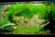Aquarium ideas & Wants / by Carol Blanchard