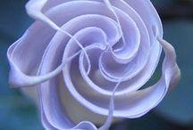 Flower Power / by Jenny White Schnitzer