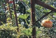Giant Edible Trellis Project