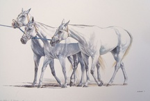 chevaux passion