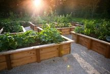 Raised garden beds / by Suzie Souza