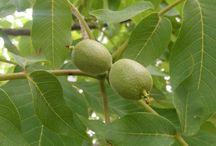 Bağ-Bahçe-Meyve-Sebze