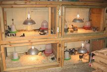 Baby Chick Pen