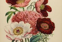 Famous Artists/ Victorians Year 3 / Victorian ideas year three