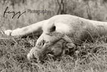 Wildlife Black and Whites / Find all these photographs and more on my Facebook Page - all images © Zena Fogg Wildlife and Landscape Photography.