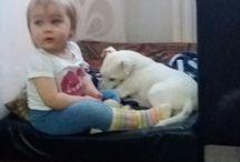 DIIVA ihana Russeli / Diiva on meidän ihana pieni koira