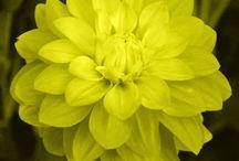 inspiración floral