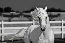 Horses and Fashion