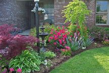 landscaping: front + sides