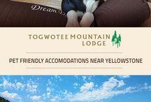 Togwotee Mountain Lodge Accomodations