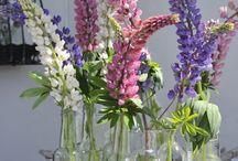 Flowers ! / Blomster og dekor