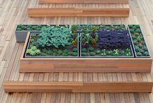 Rośliny w mieście