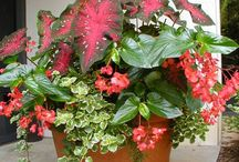 ガーデニング:観葉植物寄せ