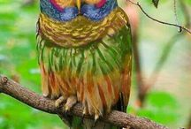 Colourfull Creations
