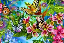 Buttefly/Farfalle