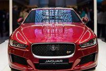 The #XE has arrived. #Instacar #Performance #Drama - photo from jaguar http://ift.tt/1NnSZU3