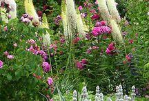 Some ideas to my (siirtolapuutarha) garden