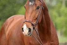 horses--- bold and beautiful