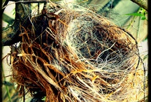 What to Do When Your Kids Leave Home / Having trouble filling your 'empty nest'? Not with Bertha around!