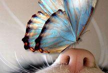 farfalle / colori della natura