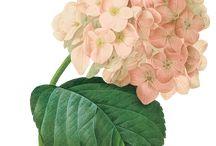 Spring-Tavaszi virágok