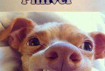 Tuna.....the puppy!