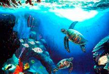 vizek élővilága