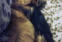 My cats my dog❤