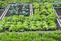 Food gardening in shade