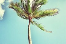Holiday in Hawaii ♡
