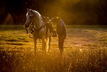 Cfoto portaits 2016 / Horse, horses, light, summer, photography, www.cfoto.nl