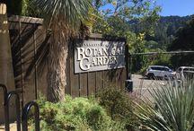 Berkeley University Botanical Garden